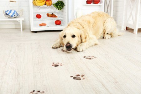 How to Keep Your Carpet Clean Should You Have Pets - PowerPro Carpet and Rug Cleaning Service