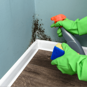 Mold Remediation - PowerPro Carpet and Rug Cleaning Service