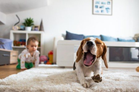 REASONS FOR PROFESSIONAL CARPET CLEANING - PowerPro Carpet and Rug Cleaning Service