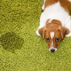 Pet Urine Cleaning